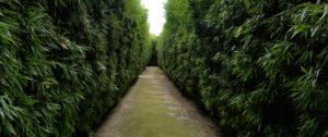 labyrinth-ricci