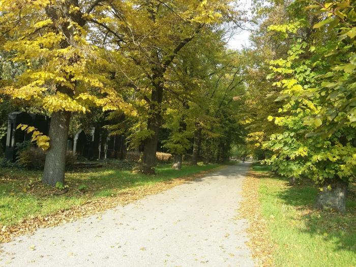 Schöne Spazierwege am Zentralfriedhof