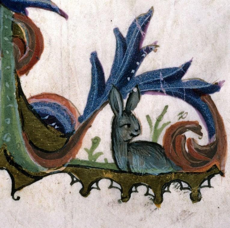 Ist das wirklich ein Hase? Guido de Cauliaco, Chirurgia, Italy 14th century (Carpentras, Bibliothèque municipale, ms. 322, fol. 104v)